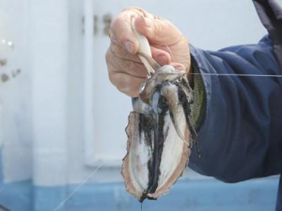釣具の海友の2020年11月22日(日)3枚目の写真