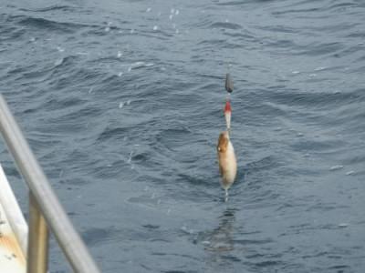 釣具の海友の2020年11月22日(日)4枚目の写真
