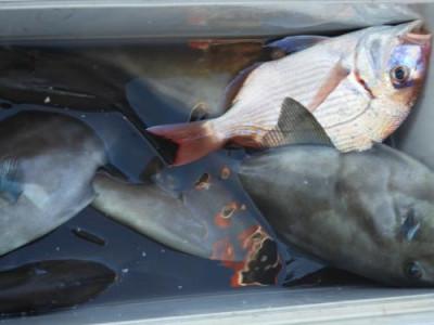 釣具の海友の2020年11月24日(火)4枚目の写真