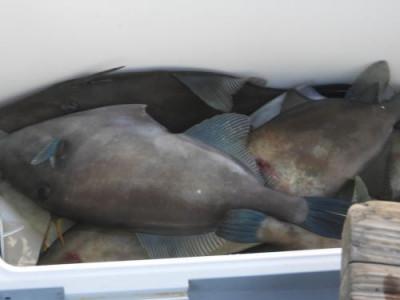 釣具の海友の2020年11月24日(火)5枚目の写真