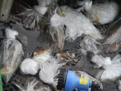 釣具の海友の2020年11月26日(木)2枚目の写真