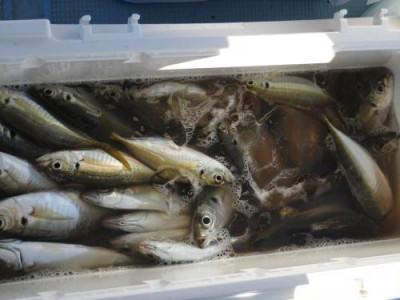 釣具の海友の2020年11月29日(日)1枚目の写真