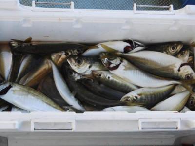 釣具の海友の2020年11月29日(日)2枚目の写真