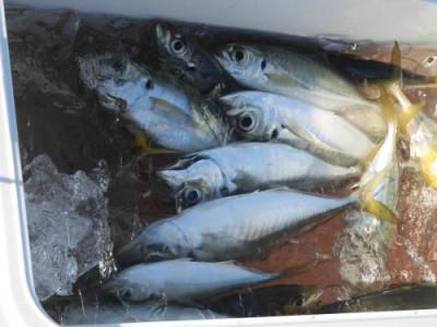 釣具の海友の2020年11月29日(日)3枚目の写真
