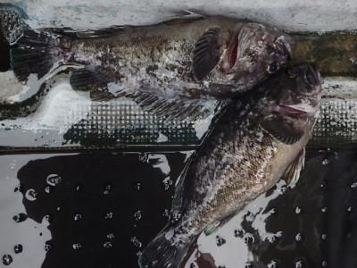 MARINE FISHING CLUBの2021年1月16日(土)1枚目の写真