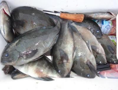 丸銀釣りセンターの2021年1月15日(金)1枚目の写真