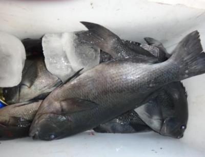 丸銀釣りセンターの2021年1月15日(金)2枚目の写真
