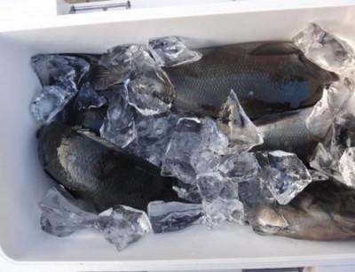 丸銀釣りセンターの2021年1月15日(金)4枚目の写真