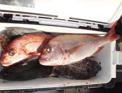 丸銀釣りセンターの2021年1月15日(金)5枚目の写真