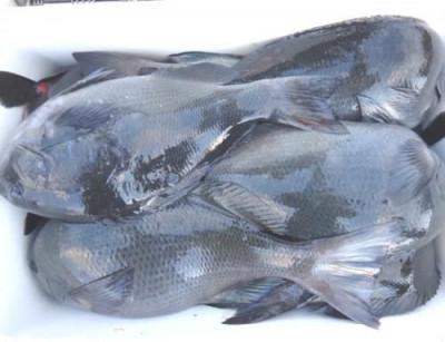 丸銀釣りセンターの2021年1月17日(日)2枚目の写真