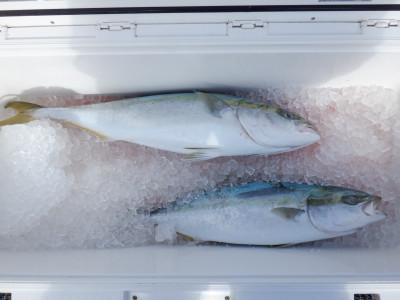 オーシャン串本の2021年1月20日(水)2枚目の写真