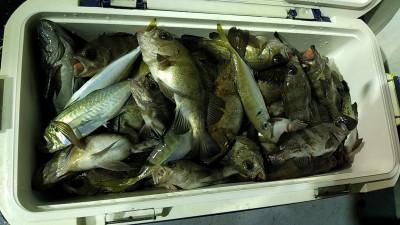 遊漁船ビックボーイの2021年1月23日(土)5枚目の写真
