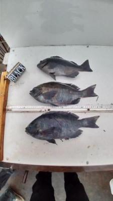 築山渡船の2021年1月24日(日)2枚目の写真