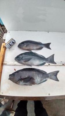築山渡船の2021年1月24日(日)3枚目の写真