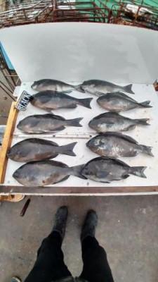 築山渡船の2021年1月24日(日)4枚目の写真
