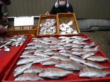 奥村釣船の2021年1月23日(土)3枚目の写真