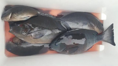 乙島丸の2021年1月5日(火)2枚目の写真