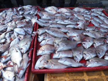 奥村釣船の2021年1月29日(金)5枚目の写真