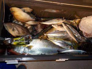 美浜釣舟センターの2020年12月27日(日)2枚目の写真