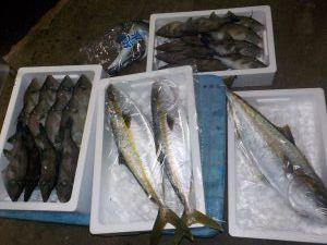 美浜釣舟センターの2020年12月27日(日)3枚目の写真