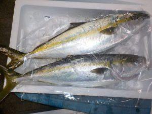 美浜釣舟センターの2020年12月27日(日)5枚目の写真