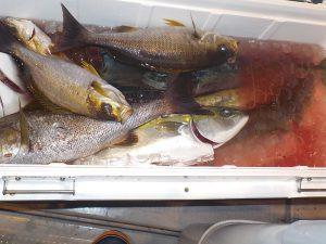 美浜釣舟センターの2020年12月29日(火)2枚目の写真