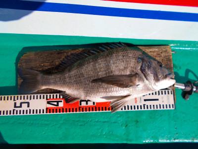 平良丸の2021年1月30日(土)4枚目の写真