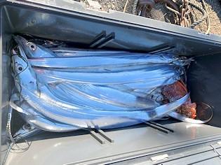 橋安丸の2021年1月31日(日)5枚目の写真