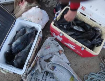 丸銀釣りセンターの2021年1月31日(日)4枚目の写真
