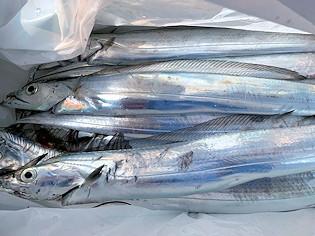 橋安丸の2021年2月10日(水)4枚目の写真