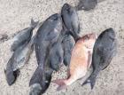丸銀釣りセンターの2021年2月12日(金)3枚目の写真