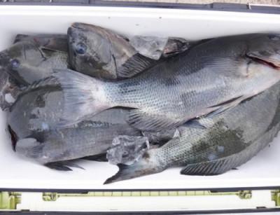 丸銀釣りセンターの2021年2月12日(金)4枚目の写真