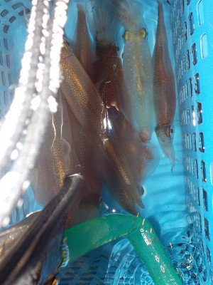 美浜釣舟センターの2021年2月11日(木)5枚目の写真