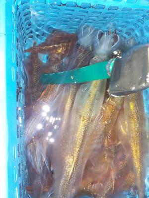美浜釣舟センターの2021年2月12日(金)5枚目の写真