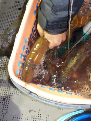 美浜釣舟センターの2021年2月13日(土)5枚目の写真