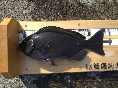大ちゃん渡船の2021年2月11日(木)5枚目の写真