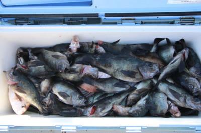 西岡遊漁の2021年2月16日(火)3枚目の写真