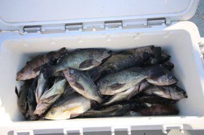 西岡遊漁の2021年2月16日(火)4枚目の写真