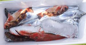 第一大漁丸の2021年2月20日(土)3枚目の写真