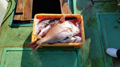 清家渡船の2021年2月21日(日)4枚目の写真