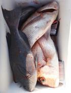 丸銀釣りセンターの2021年2月21日(日)2枚目の写真