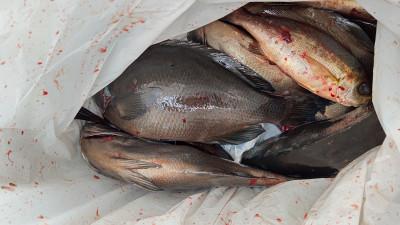 清家渡船の2021年2月25日(木)2枚目の写真