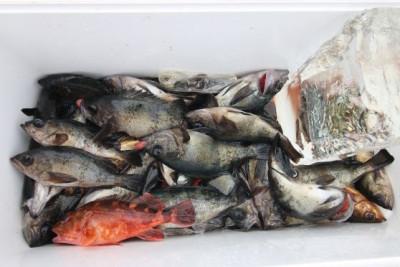 西岡遊漁の2021年2月25日(木)5枚目の写真