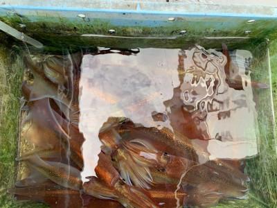 松大丸の2021年3月4日(木)1枚目の写真