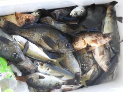 釣具の海友の2021年3月1日(月)2枚目の写真