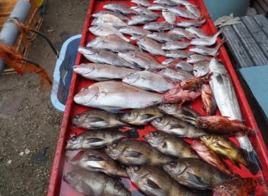 奥村釣船の2021年3月5日(金)4枚目の写真