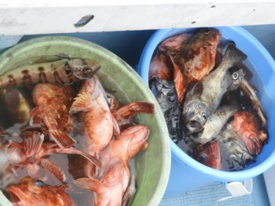 釣具の海友の2021年3月6日(土)3枚目の写真