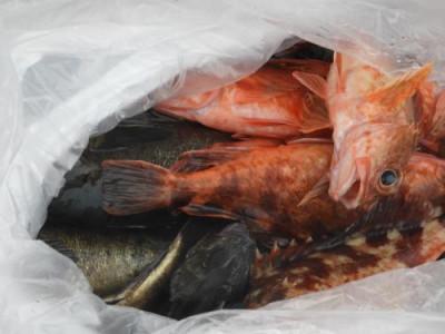 釣具の海友の2021年3月6日(土)4枚目の写真