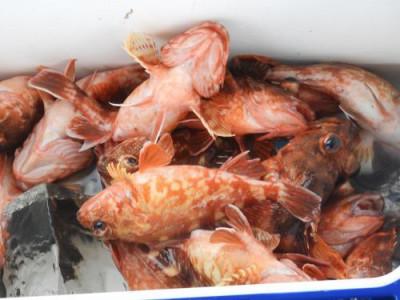 釣具の海友の2021年3月9日(火)2枚目の写真