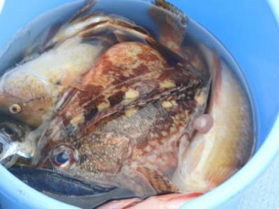 釣具の海友の2021年3月9日(火)4枚目の写真